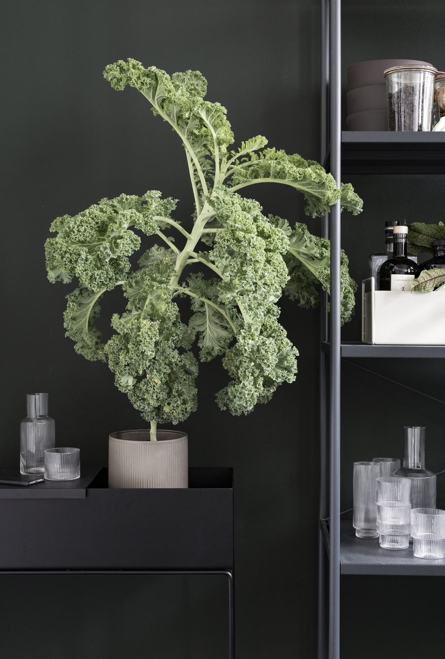 Plant box black
